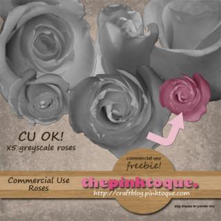 CU roses by pinktoque